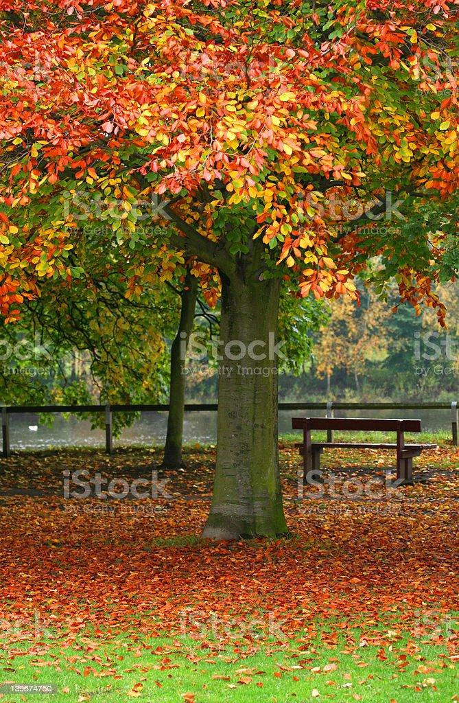 Autumns Park Bench royalty-free stock photo