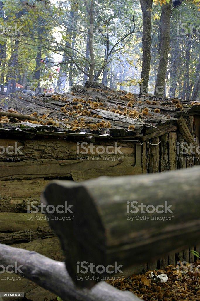 autunno stock photo