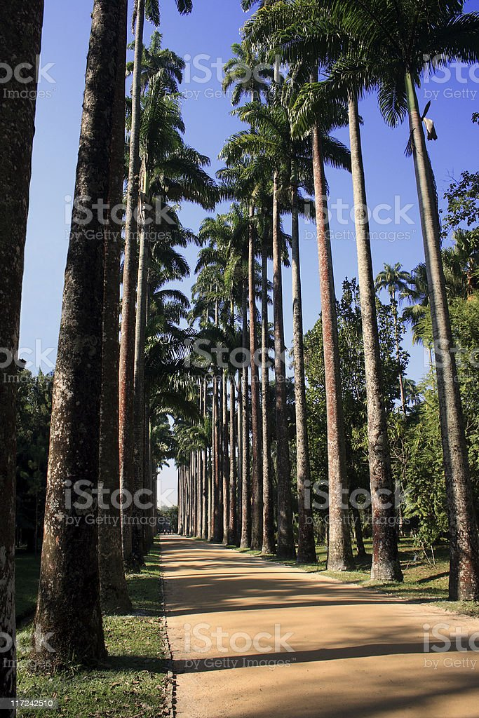 Avenue full of palm trees royalty-free stock photo