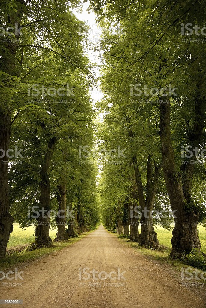 Avenue in early autumn stock photo