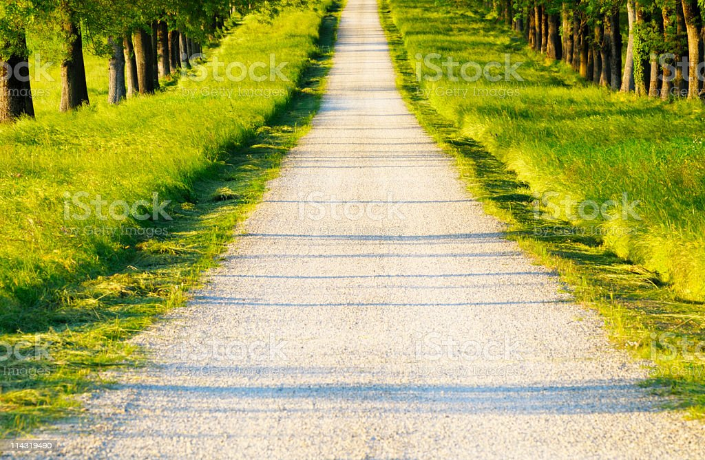 Avenue in Late Afternoon royalty-free stock photo