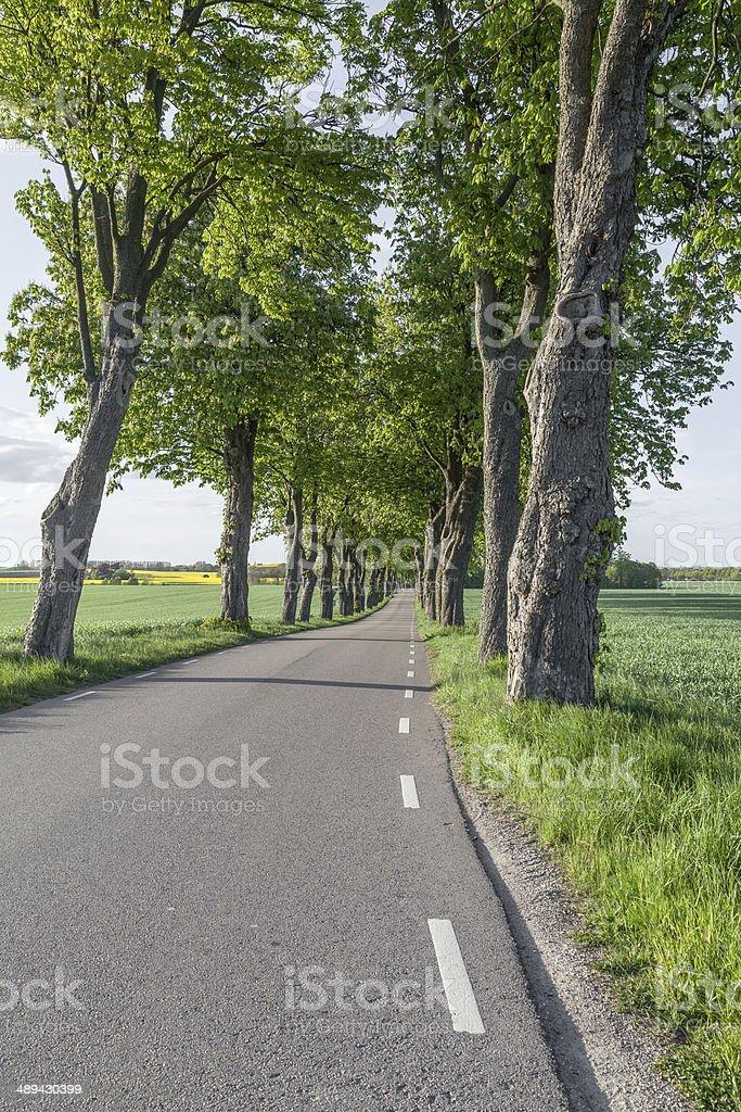 Avenue en la primavera foto de stock libre de derechos
