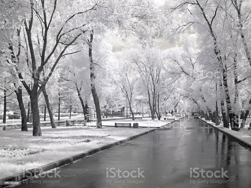 Avenue is in a park royalty-free stock photo