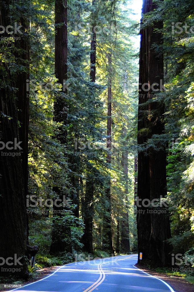 Avenue of the Giants, Humboldt Redwoods State Park stock photo