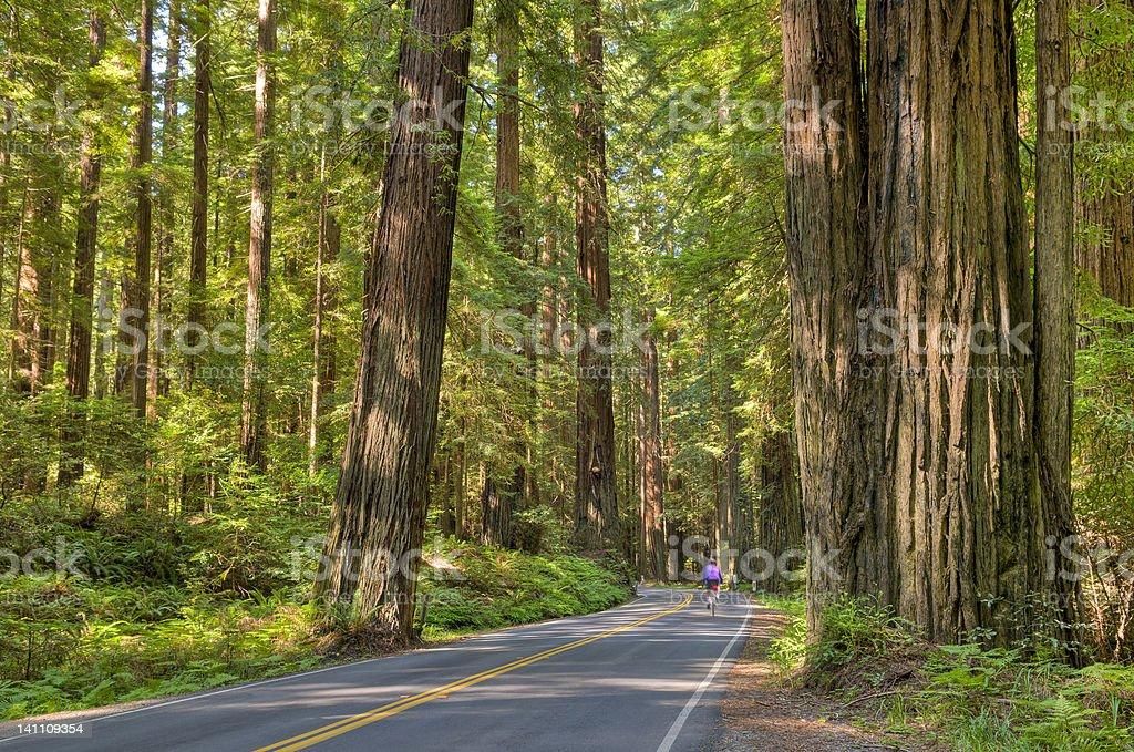 Avenue of the Giants stock photo
