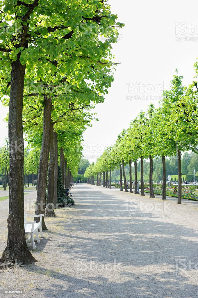 Avenue of Trees in a Formal Garden royalty-free stock photo