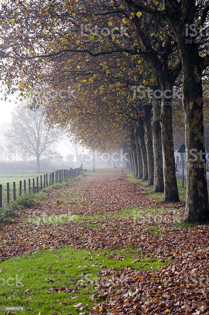 Avenue of trees in autumn, Edam, Netherlands royalty-free stock photo