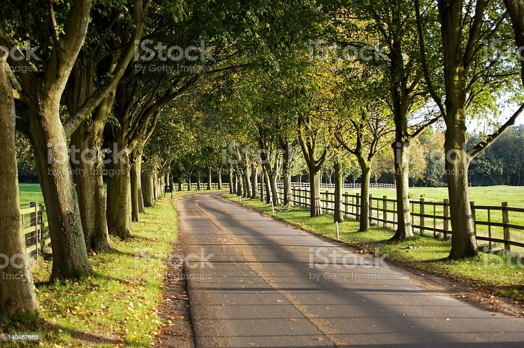Avenue of Trees. stock photo