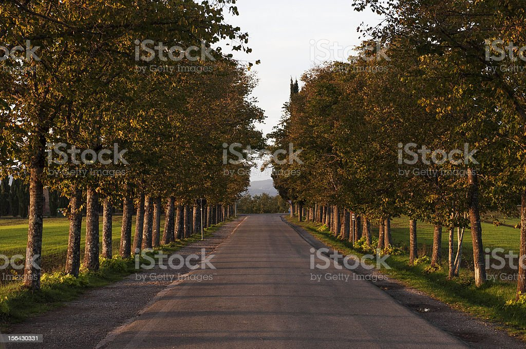 Avenue of Trees royalty-free stock photo
