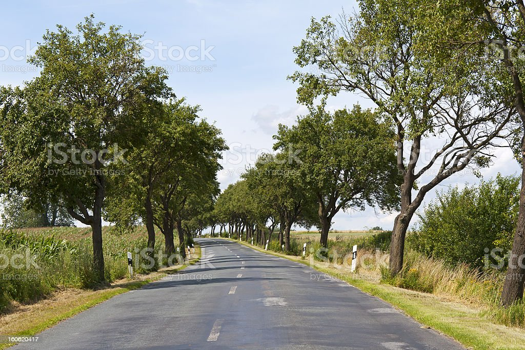 Avenue Trees in Mecklenburg royalty-free stock photo