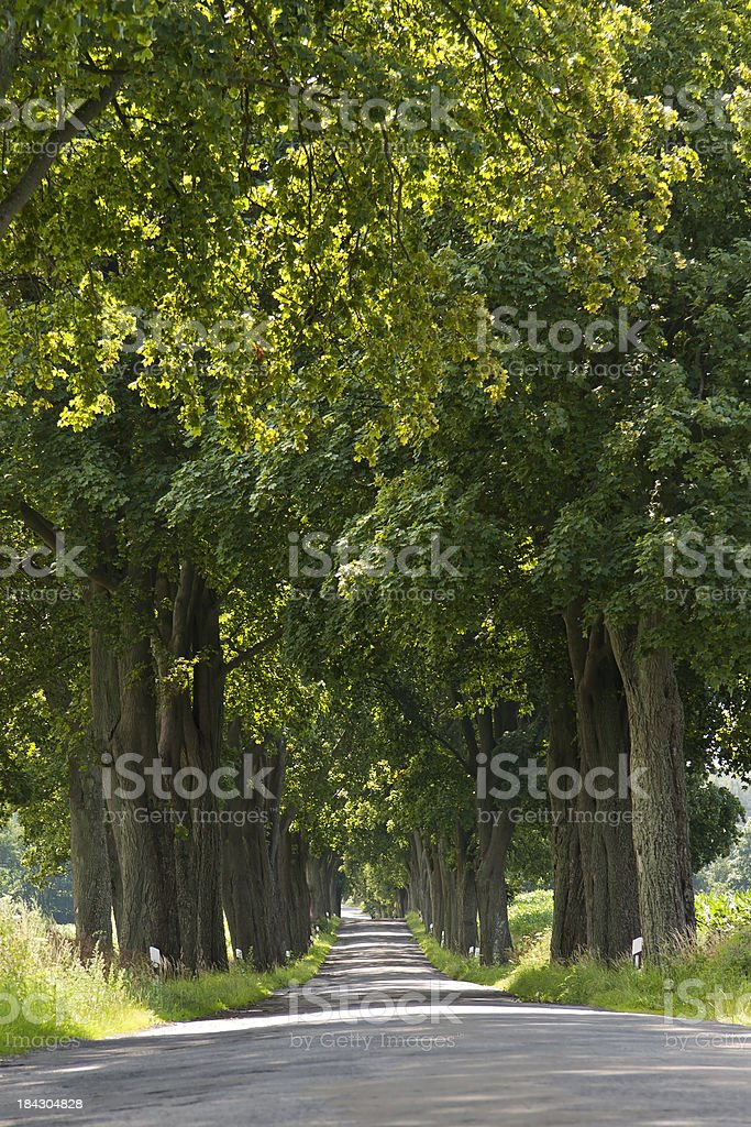 Avenue Trees in Mecklenburg stock photo
