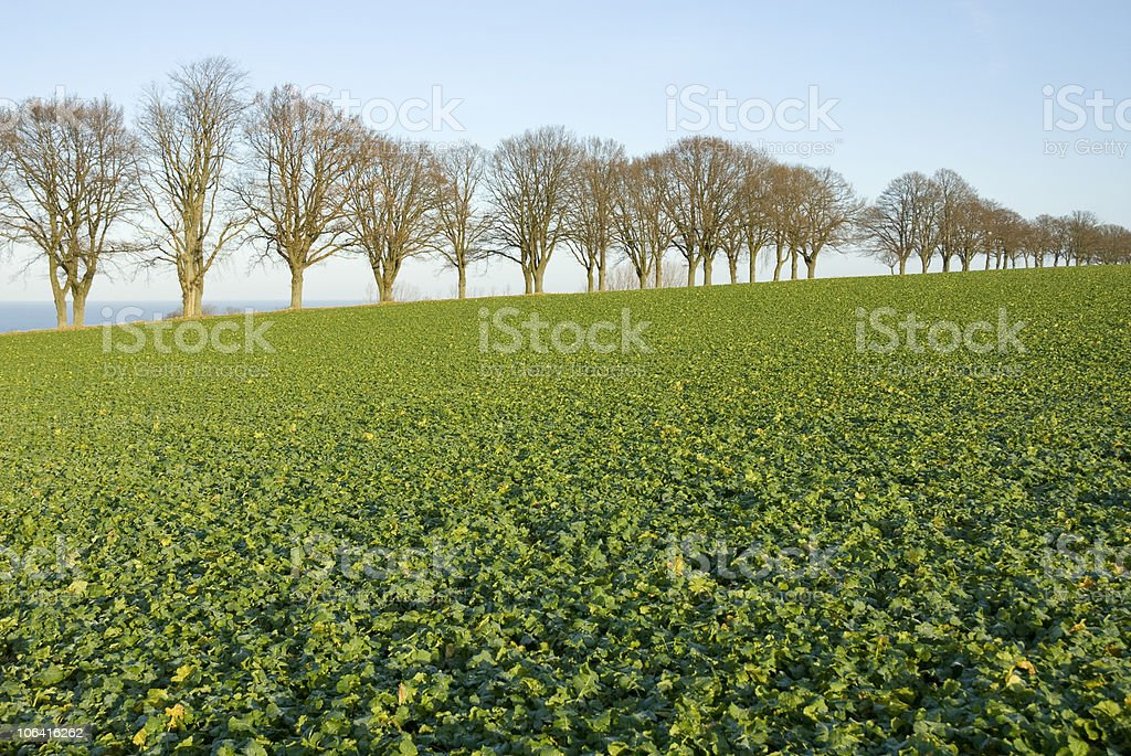 Avenue with farming field in front royalty-free stock photo