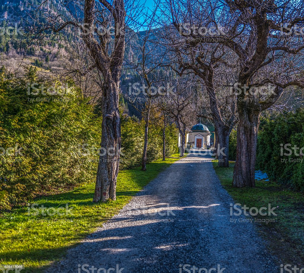 Avenue with trees, cemetery stock photo