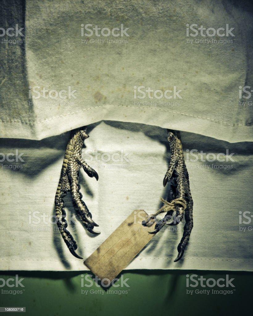 avian flu concept stock photo