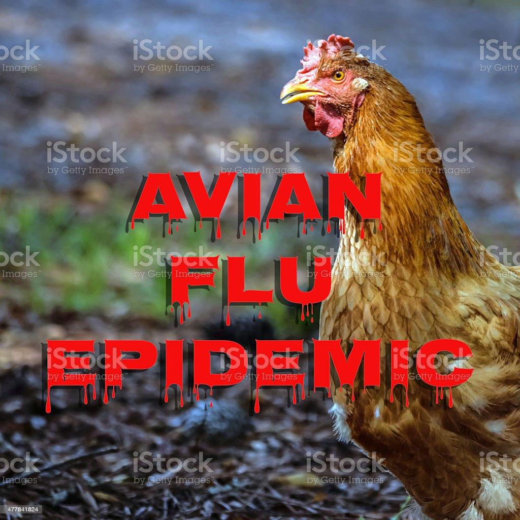 Avian Flu Epidemic centered stock photo