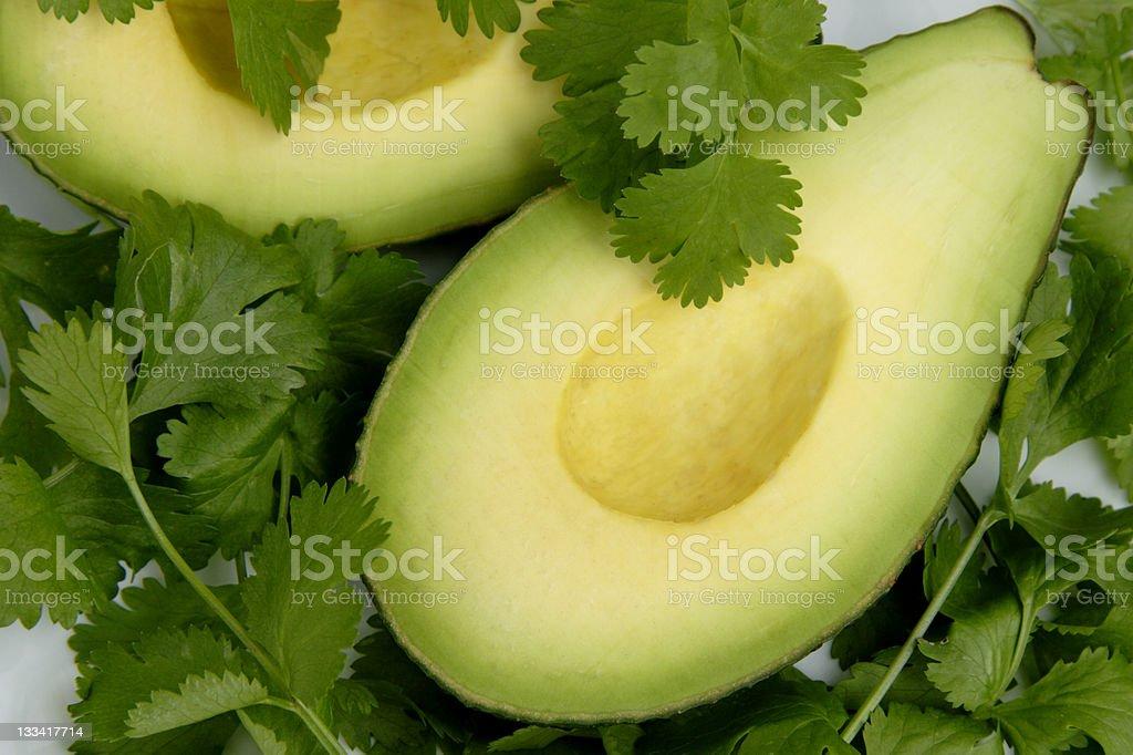 Avocado in a bed of cilantro stock photo