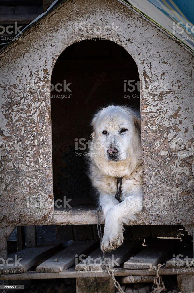 Awake dog in the cabin stock photo