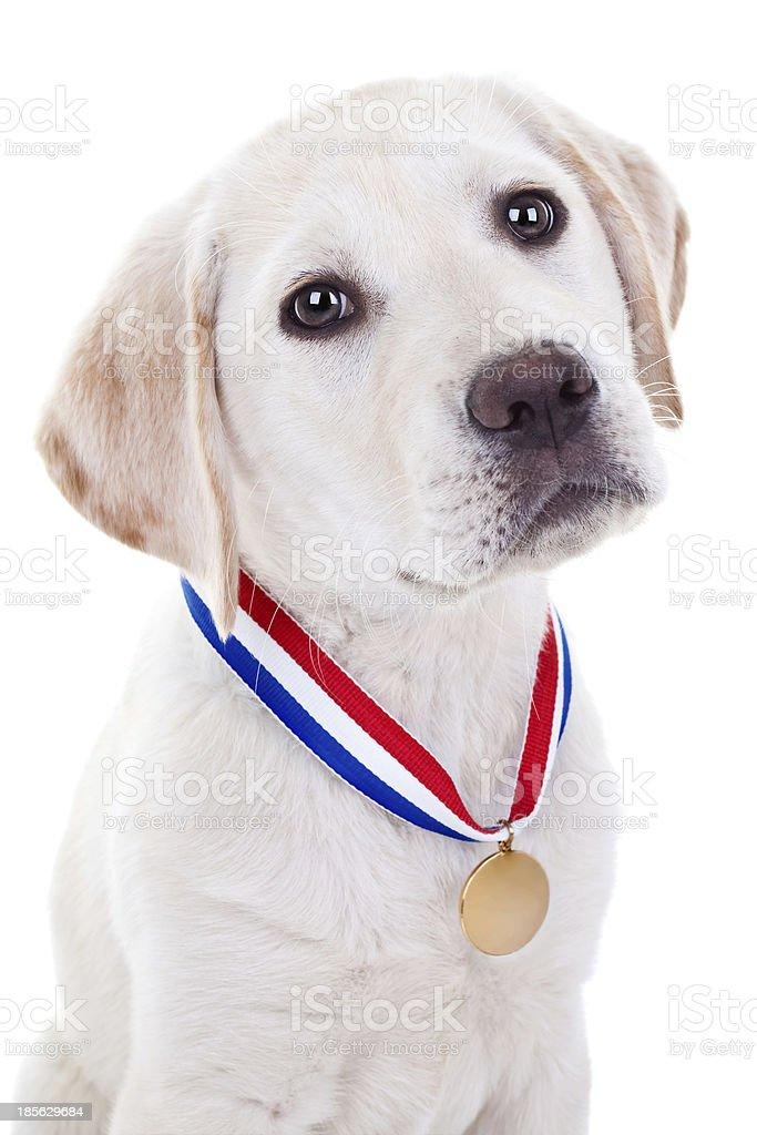 Award Winning Puppy stock photo