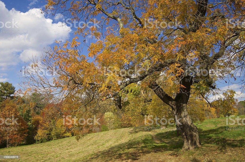 Awbury Arboretum, Philadelphia, PA royalty-free stock photo