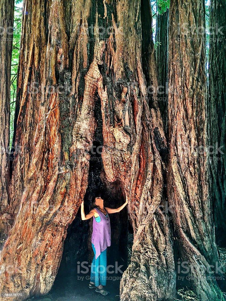 Awe of redwoods stock photo