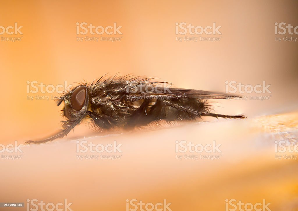 Awesome alpine fly in the alps stock photo