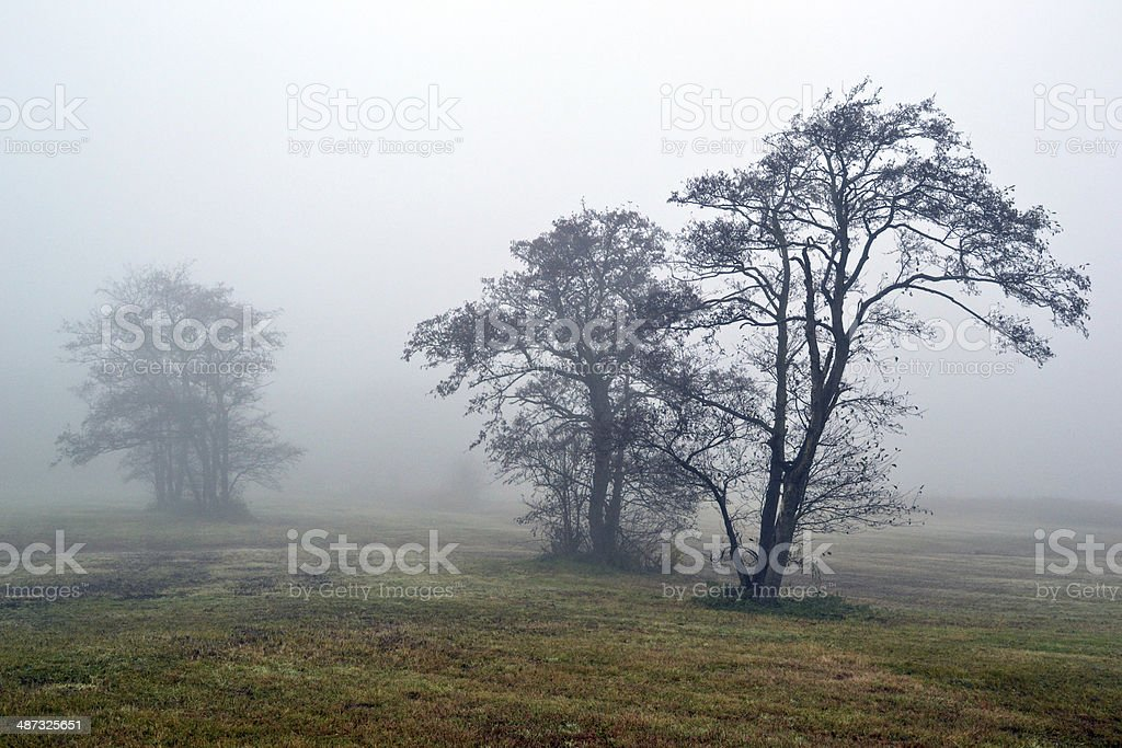 Awl の木の霧。 ロイヤリティフリーストックフォト