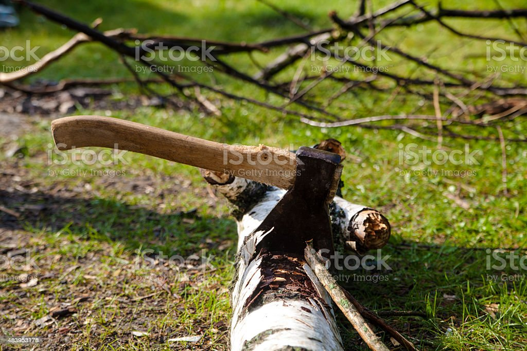 ax in the birch royalty-free stock photo