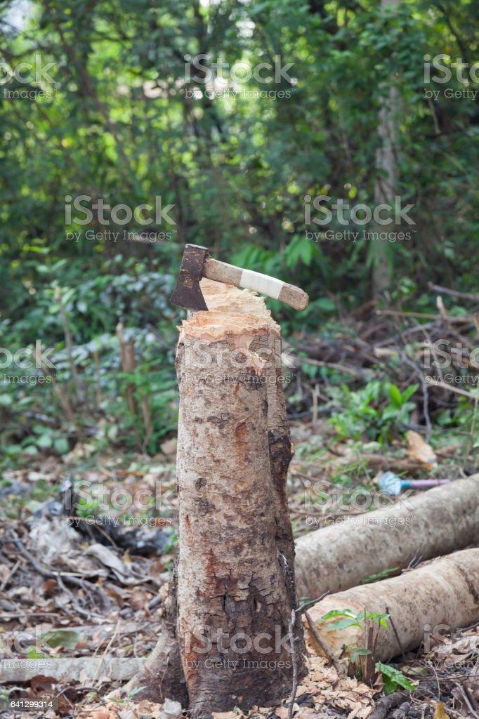 axe and stump stock photo
