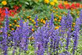 Ayano garden