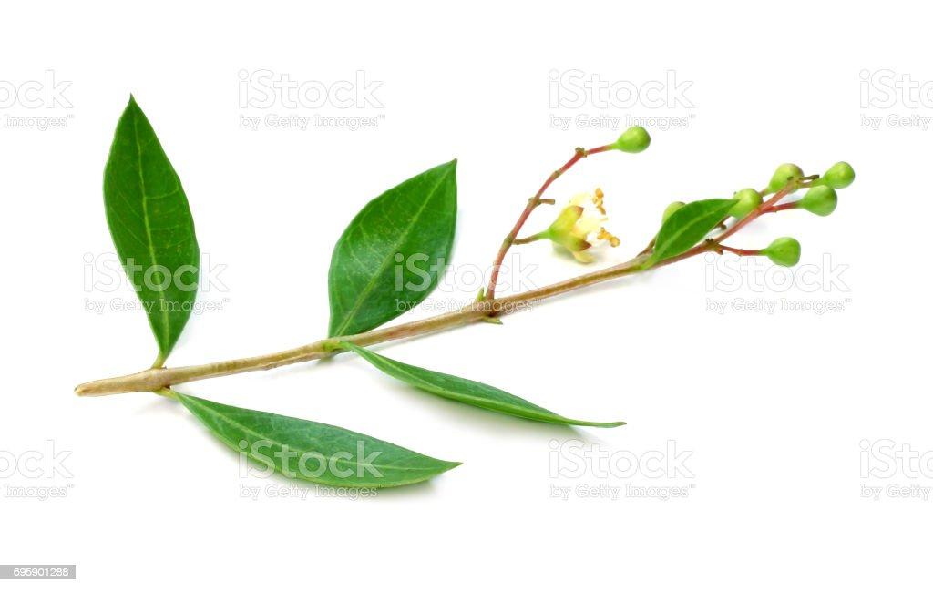 Ayurvedic henna flower stock photo