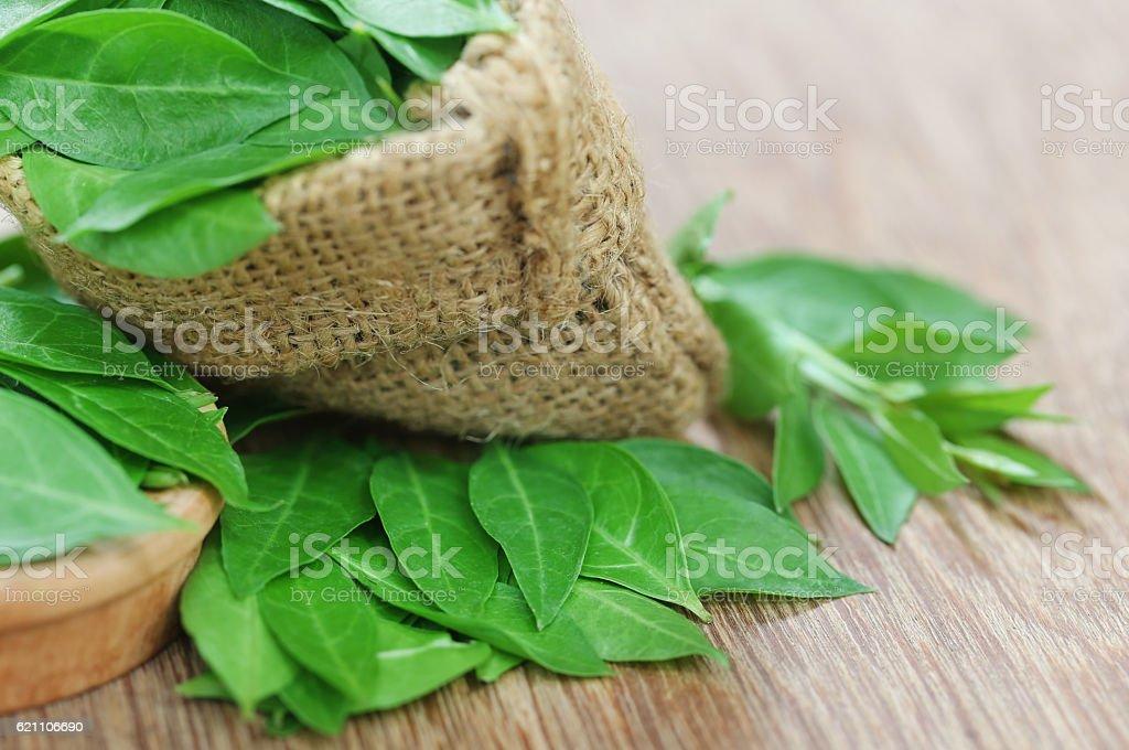 Ayurvedic henna leaves stock photo