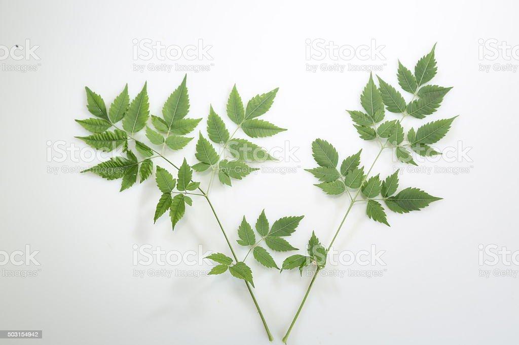 Ayurvedic Herbs Neem stock photo