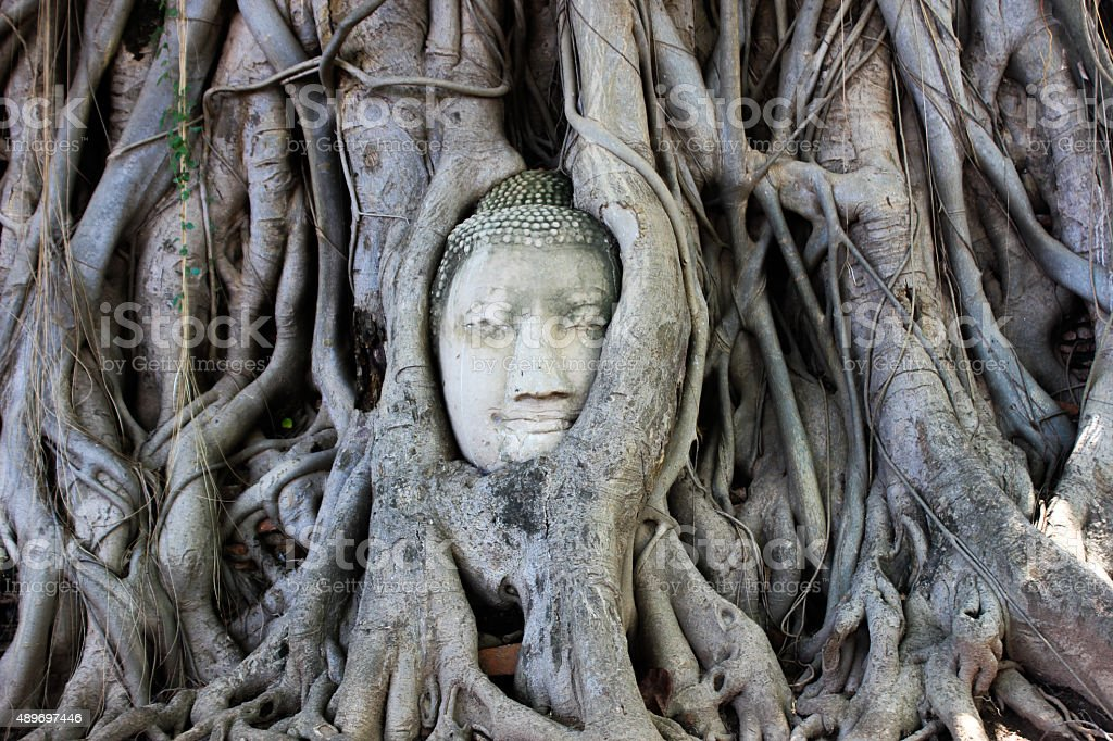 ayutthaya buddha tree stock photo