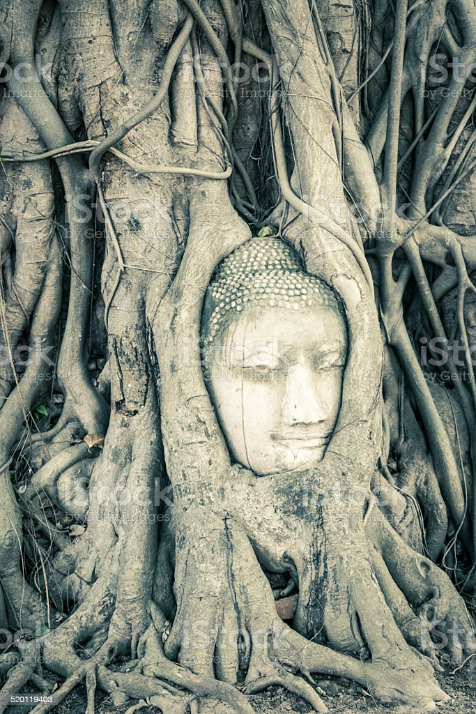 ayutthaya of Wat Maha That, thailand stock photo