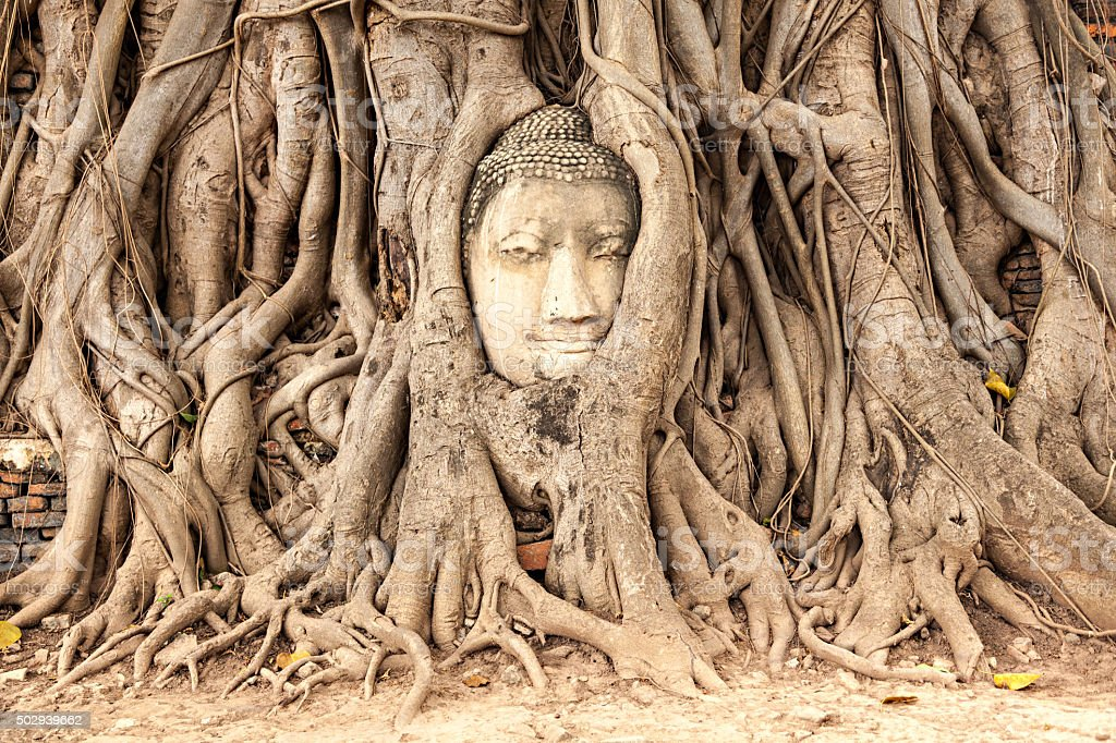 Ayutthaya, Thailand - Buddha Face in the tree stock photo