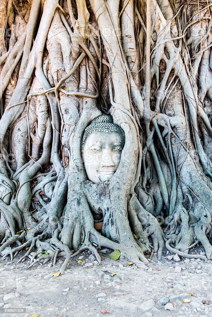 Ayutthaya, Thailand - Buddha Face in the tree stock photo