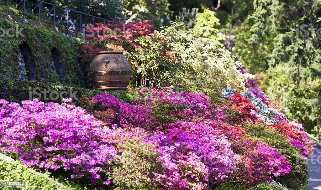 Modele de parterre de fleurs capucine fleurs avec for Plantes japonaises
