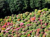 Azalea Garden