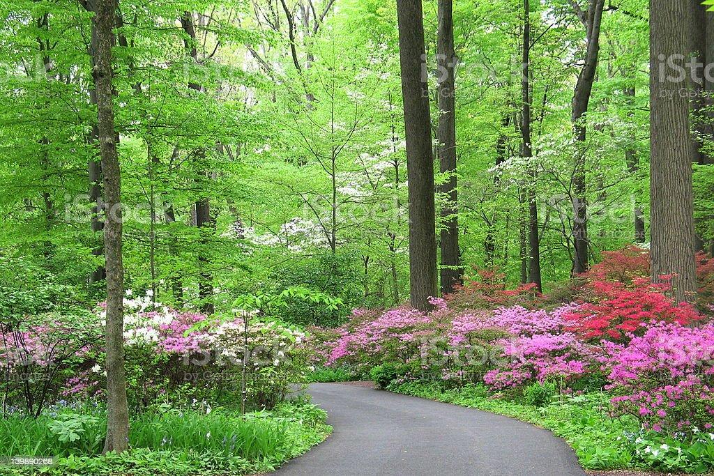 Azalea Woodland stock photo
