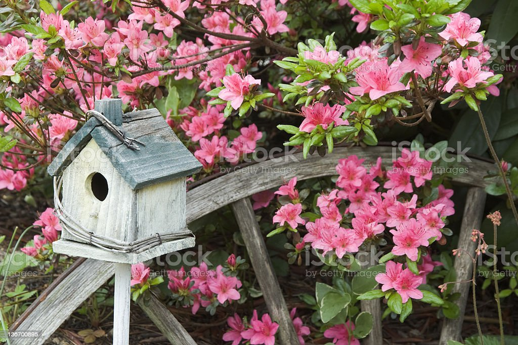 Azaleas in Spring with Garden Decorations, Landscaping Close Up stock photo