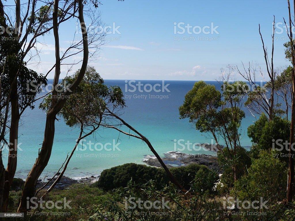 azure sea near bush stock photo