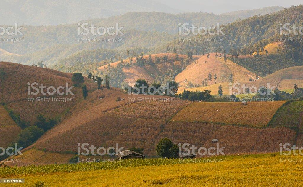 Baan Pa Bong Piang's rice terrace stock photo