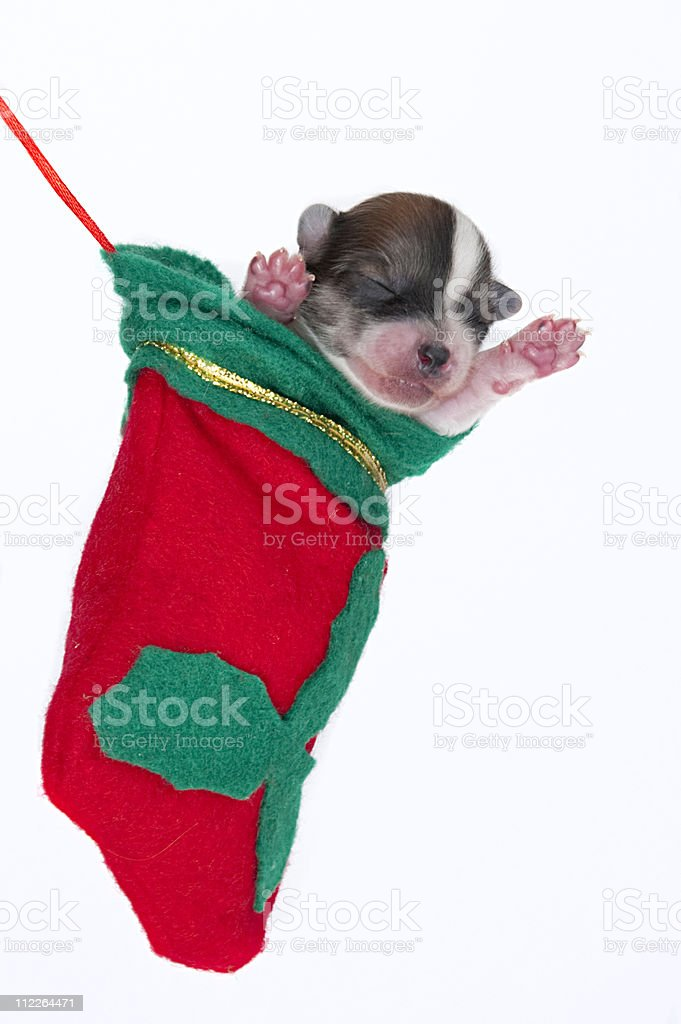Babies first christmas royalty-free stock photo