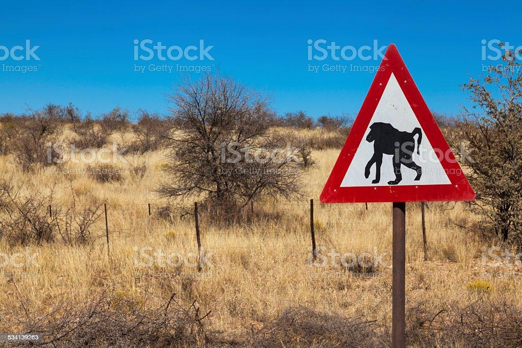 baboon alarm stock photo