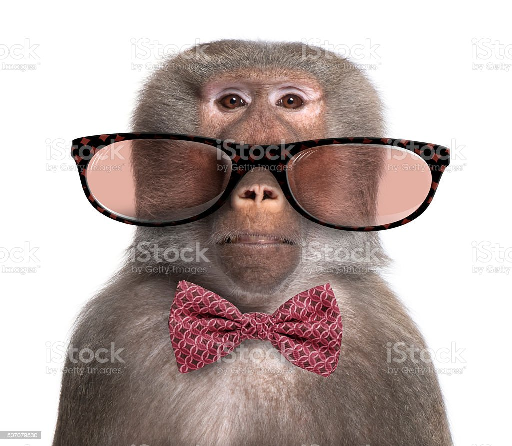Baboon wearing glasses and a bow tie stock photo