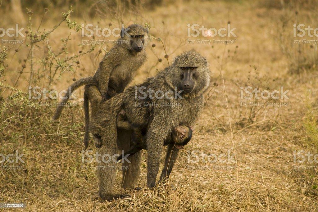 monkeys having sex with girls
