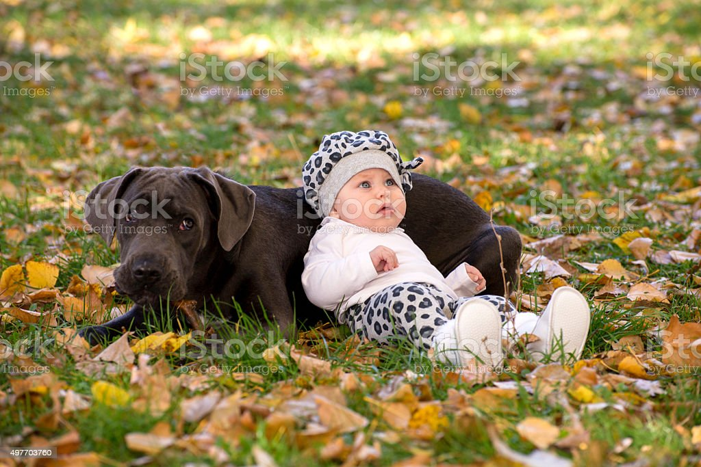 Baby and cane corso puppy stock photo