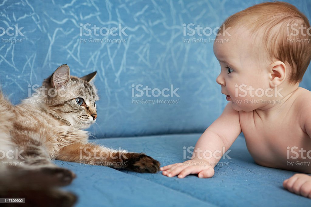 Baby and cat royalty-free stock photo