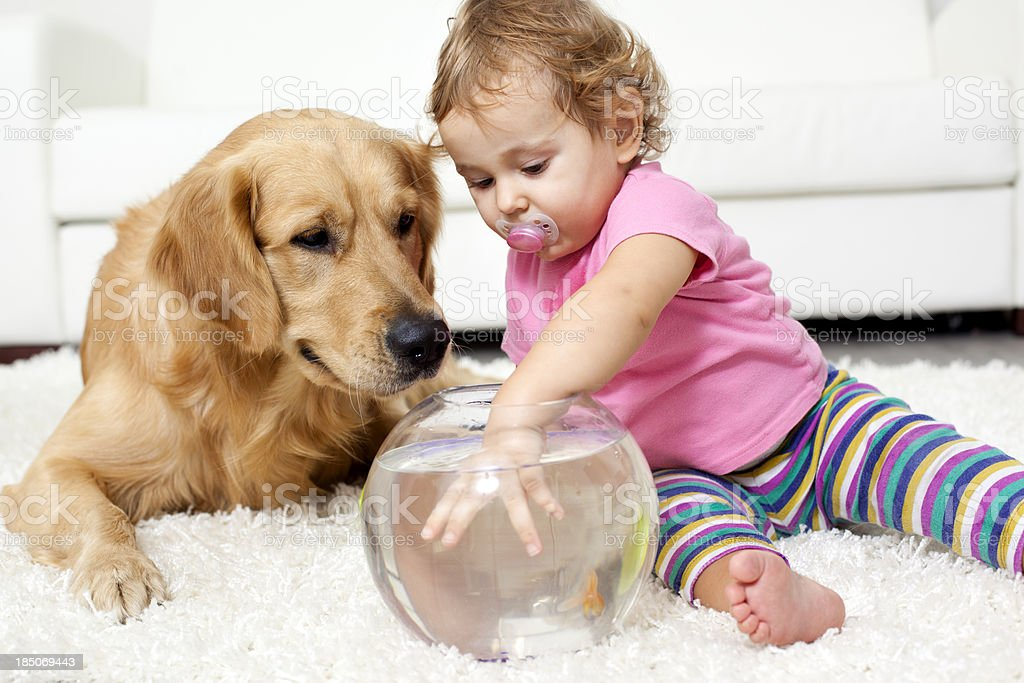Baby And Dog Catch a Goldfish royalty-free stock photo