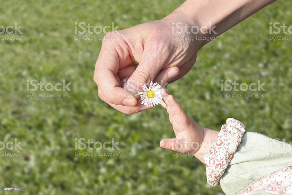 baby and father hand with daisy flower stock photo